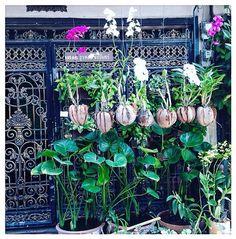 • Good morning Bangkok • #SoStylishSbyS #sostylish #styling #style #stylist #stylish #fashion #FashionStylist #stylistlife #thailandia #igersthailandia #bangkok #goodvibes #igersbangkok #lifeintravel #vacation #iphonesia #travel #igersflowers #igersthailand #travelgram #fashionista #orchids #morninginbangkok