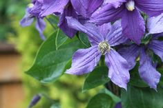 Saskatoon Horticultural Society Passport Tour July 13 2013