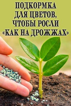 Plantar, Beans, Vegetables, Flowers, Sodas, Lawn And Garden, Beans Recipes, Veggie Food, Vegetable Recipes