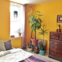 Love the bright wall and plant corner!