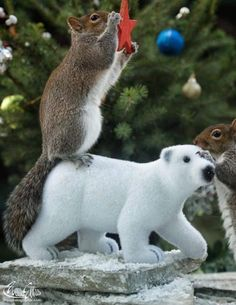 Photograph Team work by Max Ellis on N Animals, Funny Animals, Cute Animals, Christmas Squirrel, Christmas Animals, Squirrel Pictures, Funny Animal Pictures, Funny Pics, Cute Squirrel