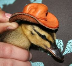 Hey remember hot-tube night? Ducky with a hat... hehehe