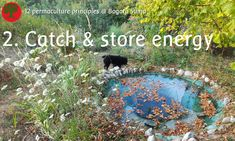 Permaculture principles: 2. Catch & store energy  This rainwater collecting pond on top of the garden, slowly quenches the garden's thirst and it provides a cool habitat for various water loving animals.