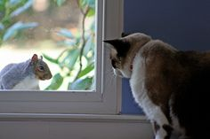 So in honor of Squirrel Appreciation Day, let's take a closer look at the hilarious way that cats are fascinated with these bushy-tailed creatures. Check out these five videos of felines who are absolutely obsessed with squirrels.