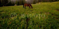 Cowgirl's dream! A horse with the wildflowers!