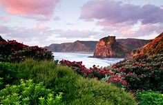 Sunset at Piha beach & Lion Rock near Auckland, New Zealand (© Travelscape Images/Alamy)