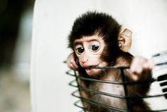 20 Baby Dieren in Mandjes - BrainFuel