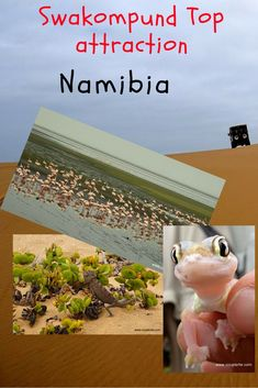 Eco tours, quad-biking, sandboarding, rallying through the desert dunes. Namibia has it all! These are the top things to do in Swakopmund & Walvis Bay. Travel Couple, Family Travel, Best Restaurants In Rome, Travel Tips, Travel Plan, Travel Info, Travel Destinations, Stuff To Do, Things To Do