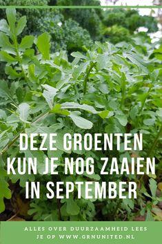 Forest Garden, Edible Garden, Easy Garden, Vegetable Garden, Growing Herbs, Growing Vegetables, Meditation Garden, Garden Maintenance, Natural Garden
