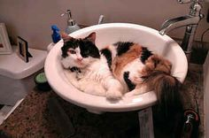 17 Extremely Helpful Cats