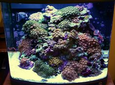 How many zooanthids? Lifted from a thread on Reef Central