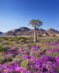 Goegap Nature Reserve – Experience the Northern Cape, South Africa Terre Nature, Beautiful World, Beautiful Places, Foto Picture, South Afrika, Marrakesh, Africa Travel, Kerala Travel, Nature Reserve