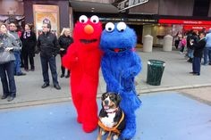 Elmo and Cookie Monster meet a doggy!