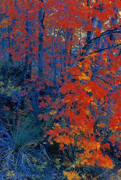 ✮ Autumn Foliage