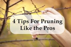 Pruning can be a little tricky if you don't do it very often! Here are 4 quick tips to help you prune like the pros! #gardening #pruning #diy #perennials