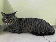 TO BE DESTROYED 4/14/14Manhattan CenterMy name is STEEL DUST. My Animal ID # is A0995567. UPDATE: ***GONE BUT NOT FORGOTTEN***