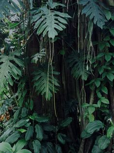 Saint Claude, Jungle Vibes, Plant Aesthetic, Backyard Landscaping, Mother Nature, Planting Flowers, Greenery, Plant Leaves, Decoration