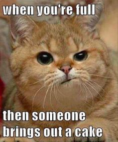 Funny Pictures Of The Day - 41 Pics 20 Funny Animal Humour Pictures 22 Funny Animal Memes And Pictures Of The Day Funny Animal Pictures Of The Day - 20 Pics Have Grumpy Birthday, death is 1 year closer How To Throw The Best Cat Party Ever Cute Animal Memes, Funny Animal Quotes, Animal Jokes, Funny Animal Pictures, Cute Funny Animals, Funny Cute, Cute Cats, Hilarious Pictures, Super Funny
