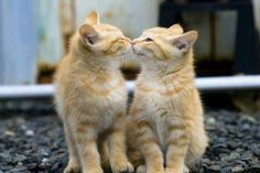 cats moment | We Heart It