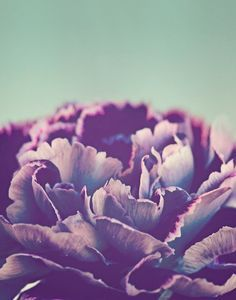 peonies background tumblr - Google Search