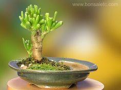 Cute little bonsai.
