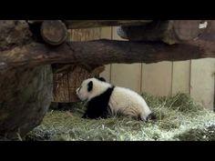 Zwillinge sind 5 Monate alt! – Tiergarten Schönbrunn
