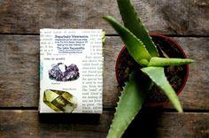 Children's Gardening Kit // 5 organic heirloom by TheKirkEstate