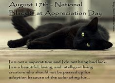 August is National Black Cat Appreciation Day {This is too funny! My kitten, Lylah's birthday is August and she's a black cat So cute! Animal Gato, Mundo Animal, Crazy Cat Lady, Crazy Cats, I Love Cats, Cool Cats, National Black Cat Day, Black Cat Appreciation Day, Here Kitty Kitty