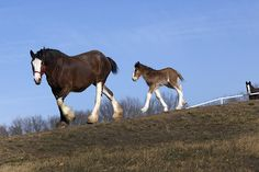 Clydesdale breeding center by Johnny Andrews