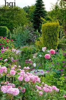 Harpur Garden Images Ltd :: 09egc36 Traditional English country cottage garden pink Roses Rosa Geranium Papaver somniferum poppies poppy sundial ornament focal point Taxus baccata Aurea fastigiate upright columnar conifer Carol and Malcolm Skinner Eastgrove Cottage, Worcs UK Marcus Harpur