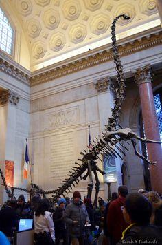 Descubre cómo entrar #gratis al  #MuseoAmericanodeHistoriaNacional #AMNH #museo #museum #NYC #NuevaYork #manhattan #newyork #dinosaurio #dino #dinosaurius