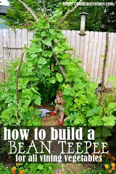 How To Make A Bean Teepee. Fun idea for kids from http://www.seedsnow.com/