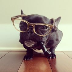 frenchie who is just like mom