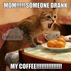 15 'Cats Hyped Up On Coffee' Memes To Get Your Through This Day #CoffeeMemes