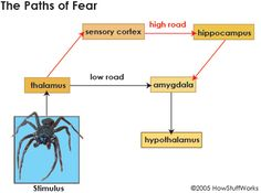 Creating Fear - HowStuffWorks