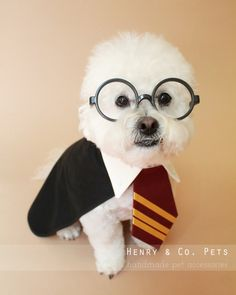 Harry Potter Pet Names Products 19 Super Ideas Cute Dog Costumes, Animal Costumes, Dog Halloween Costumes, Costume Ideas, Halloween Stuff, Halloween Ideas, Harry Potter Pet Names, Harry Potter Dog Costume, Fantasia Harry Potter
