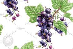 Watercolor Blackcurrant Graphics PSD, CMYK, 300 dpi, 3000x3400 px by Natalia Tyulkina