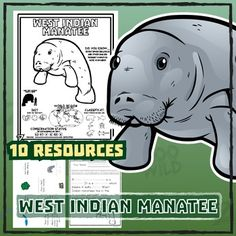 West Indian Manatee -- 10 Resources -- Coloring Pages, Reading & Activities