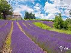 La Provence typique - Gréoux les Bains