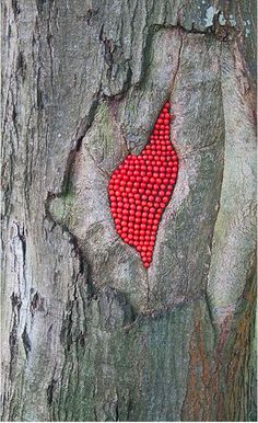 081514 rowan ~ ~ Scarlet Oak Rowan Berries - Land Art by Julia Brooklyn Land Art, Instalation Art, Ephemeral Art, In Natura, Art Sculpture, Environmental Art, Outdoor Art, Tree Art, Mandala Art