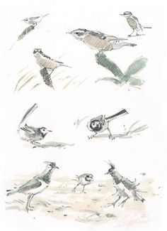 John Busby - A whinchat, pied wagtails and plovers embrace the wind.