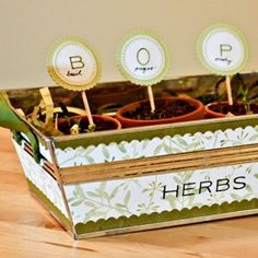 how to grow herbs in the kitchen