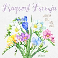 Freesia Flowers Hand Painted Clipart Watercolor. Digital flowers, Wedding bouquet, DIY invites, scrapbooking, wedding invitations