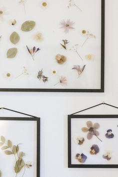 pressed flowers in the Olivago room Le Mole, Gallery Wall, Rooms, Homemade, Flowers, Bedrooms, Home Made, Royal Icing Flowers, Flower