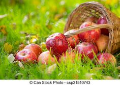Stock Photo - Fruits and flowers in autumn - stock image, images, royalty free photo, stock photos, stock photograph, stock photographs, picture, pictures, graphic, graphics