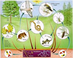 Image result for food web examples