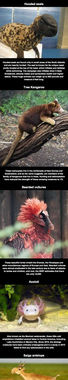 Animals That You Probably Don't Know Exist