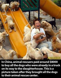 Rescued animals saying 'Thank you'