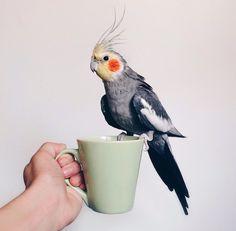Coffee with my cockatiel kinda morning