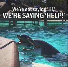 """Say """"No!"""" to SeaWorld. It's like living in an area the size of a bathtub for your entire life. Set them free <3 #MyVeganJournal"""